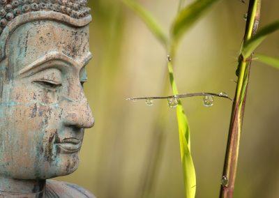 Retiro de Mindfulness