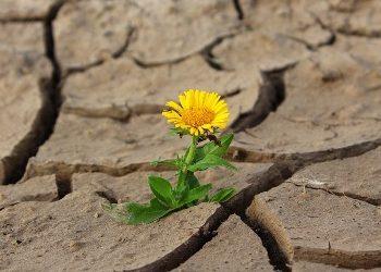 Resiliencia basada en la atención plena